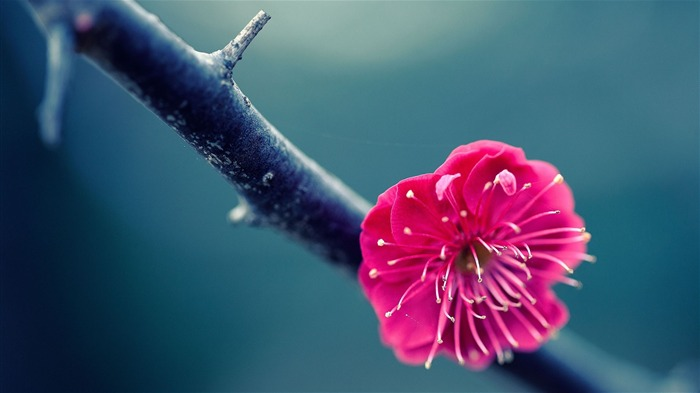 twig flower pink-HD Photography wallpaper Views:1913