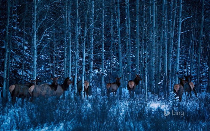 Deer winter forest-Bing theme wallpaper Views:3556