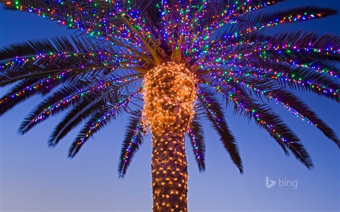 Tropical tree lighting-Bing theme wallpaper Views:2414