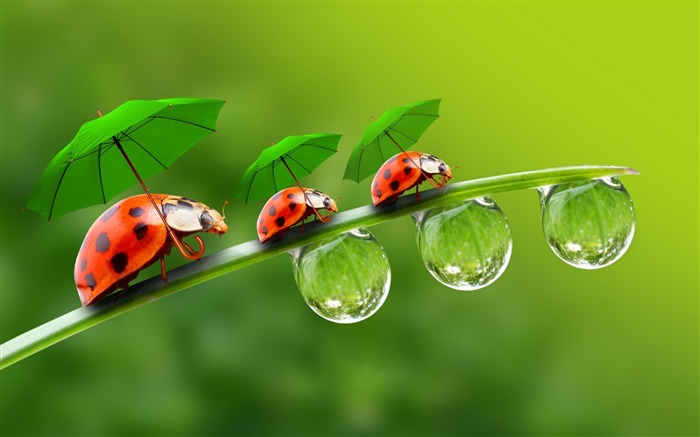 ladybugs with umbrellas-Photography HD Wallpaper Views:2773