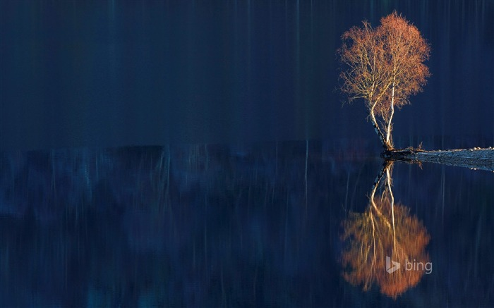 Reflection of dead trees-2015 Bing theme wallpaper Views:2797