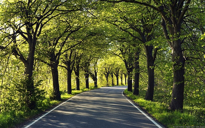 Tree Lined Road-Windows 10 HD Wallpaper Views:9007