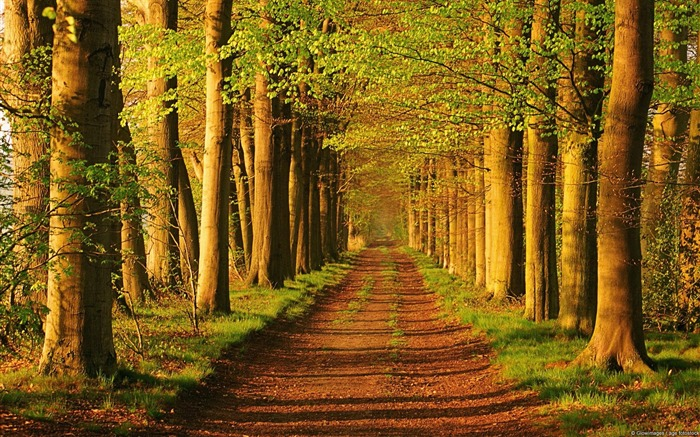 Trees on Country Road-Windows 10 HD Wallpaper Views:6161