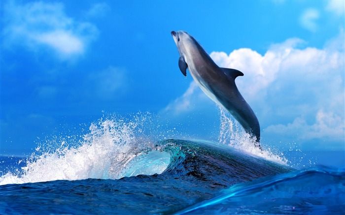 Dolphin Jumping In Waves-Animal HD Wallpaper Views:3115