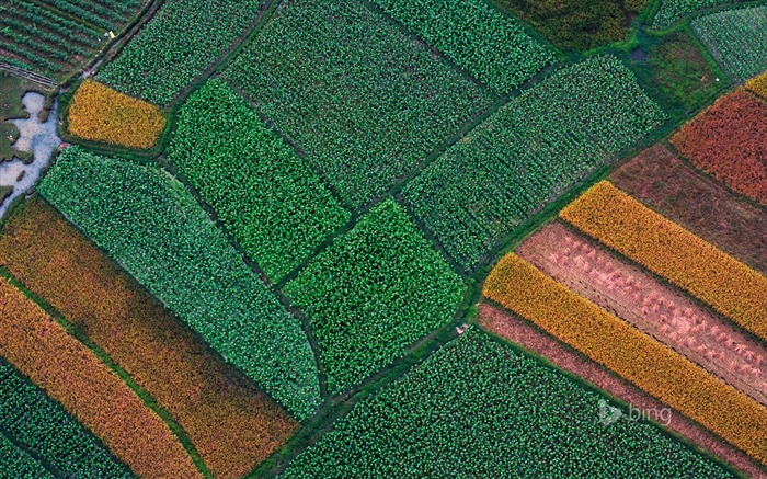 Aerial view of Farm-2015 Bing theme wallpaper Views:2708