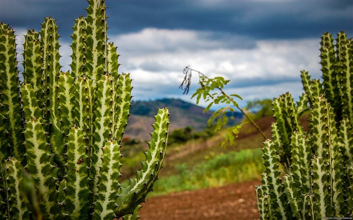 Cacti Plants-Windows 10 Wallpaper Views:5067