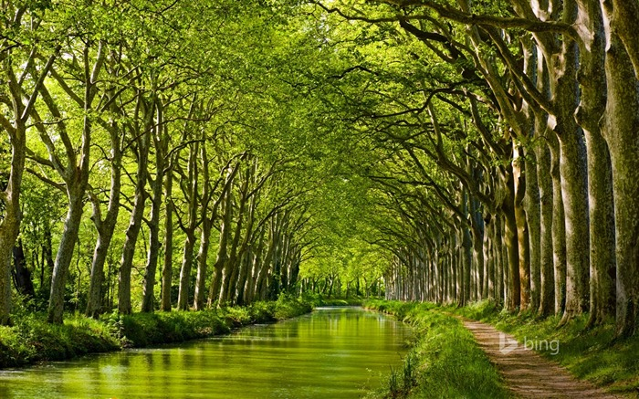 Forest green river-2015 Bing theme wallpaper Views:3739