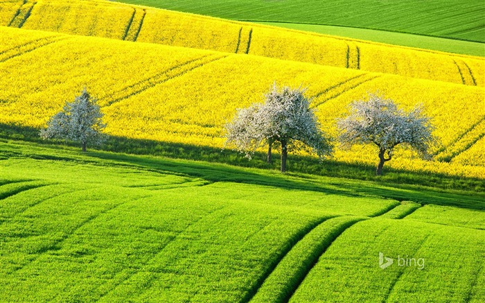 Green yellow field-2015 Bing theme wallpaper Views:2981