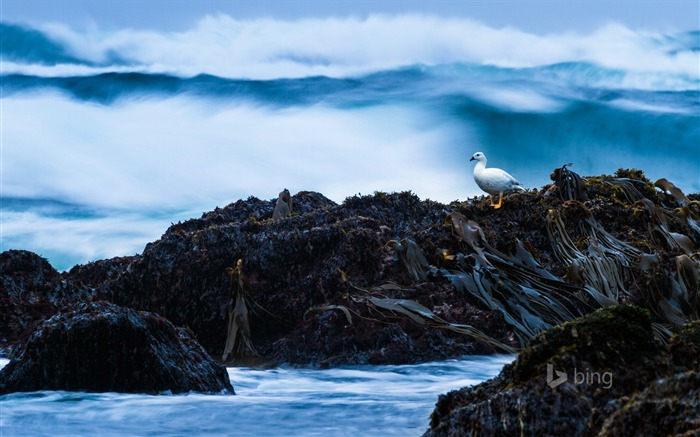 Gulls on the rocks-2015 Bing theme wallpaper Views:2171