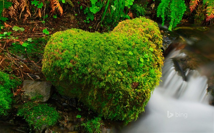 Heart shaped moss beside streams-2015 Bing theme wallpaper Views:2308