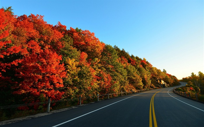 autumn road trees marking-High Quality HD Wallpaper Views:2199