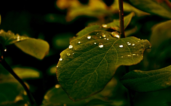 leaf of tree-High Quality HD Wallpaper Views:2149