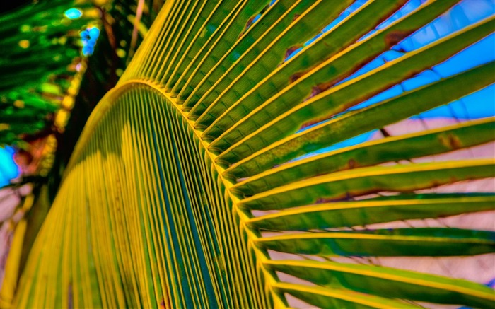 palm tree leaf-High Quality HD Wallpaper Views:2670