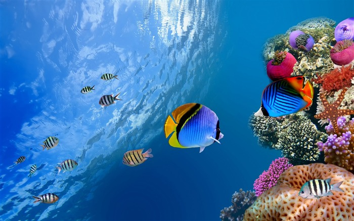 underwater coral scene-High Quality HD Wallpaper Views:1552