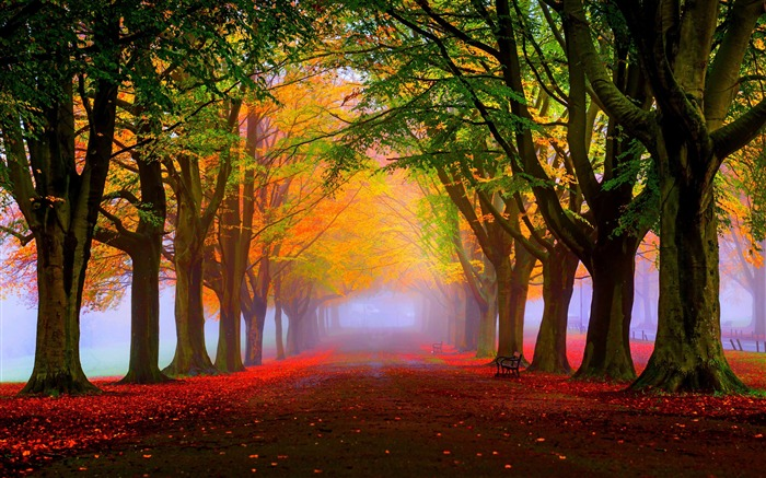 park fall fog foliage trees-Nature HD Wallpaper Views:2132