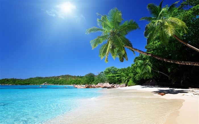 beach sand palm trees-Scenery HD Wallpapers Views:1190