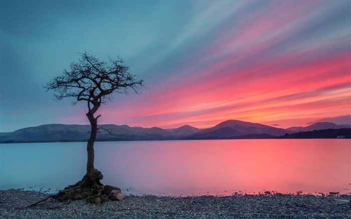 lonely tree-Nature HD Wallpaper Views:1789