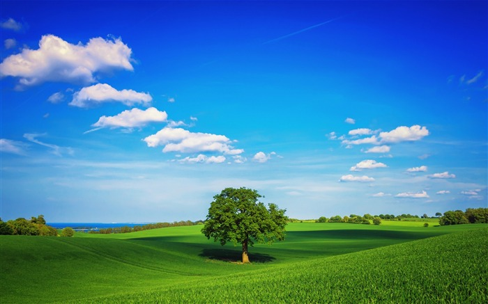 sky lonely tree summer-Scenery HD Wallpaper Views:2219