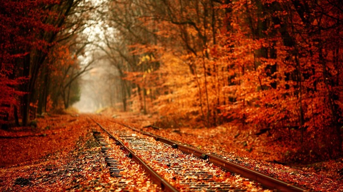 Autumn Railway Scenery-HD Nature Wallpaper Views:2965