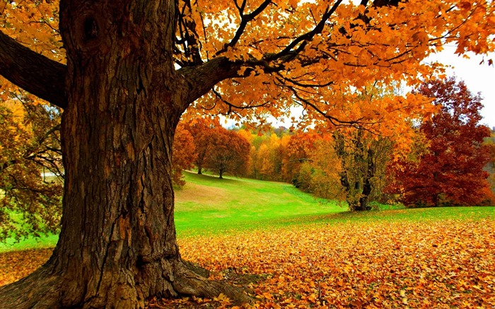 Autumn under a yellow tree-HD Nature Wallpaper Views:1238