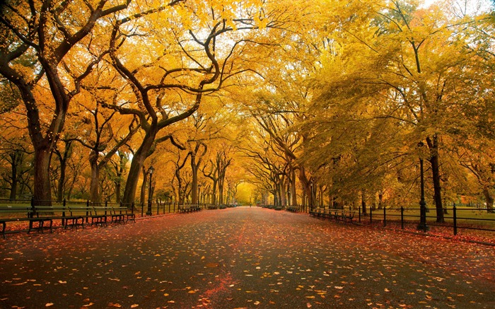 Autumn wide alley-HD Nature Wallpaper Views:1414
