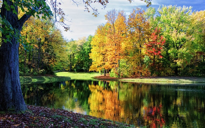 Colorful trees reflections-HD Nature Wallpaper Views:2300