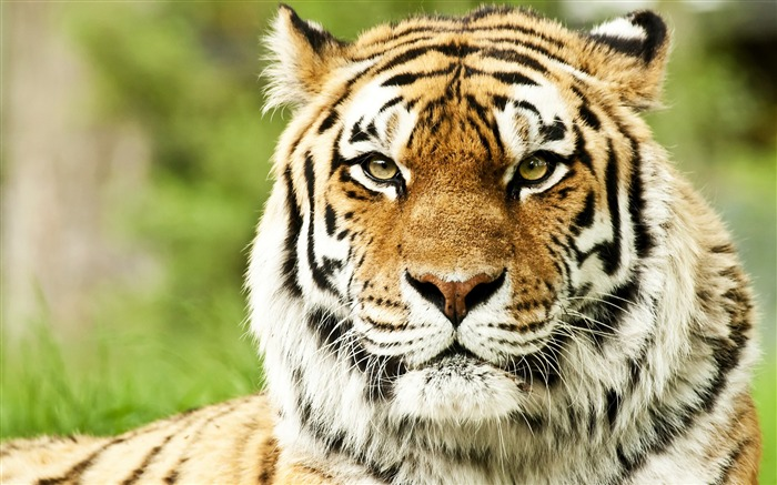 2015 Wild Animal World HD Wallpaper Views:7803