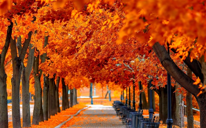 orange trees fall-HD Nature Wallpaper Views:3716