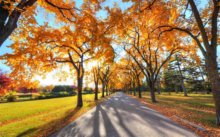 park landscape autumn-HD Nature Wallpaper Views:2016
