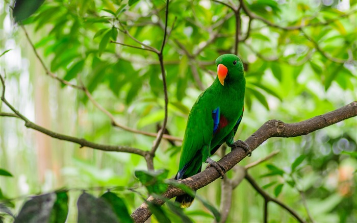 parrot bird tree branch-Photography HD wallpaper Views:2108