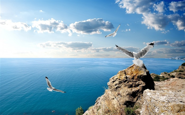 seagulls on rock-High Quality Wallpaper Views:1462