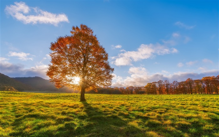 sunlight through tree-HD Nature Wallpaper Views:1324