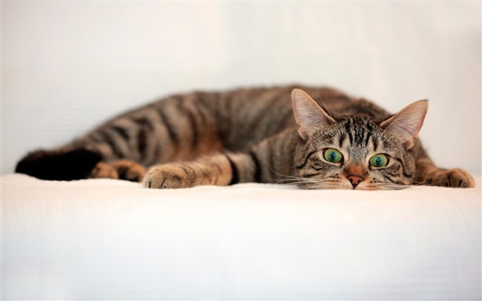 Cat tabby eyes surprise-Photo HD Wallpaper Views:2368