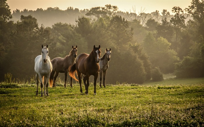 Horses grass walk-Photo HD Wallpaper Views:1882