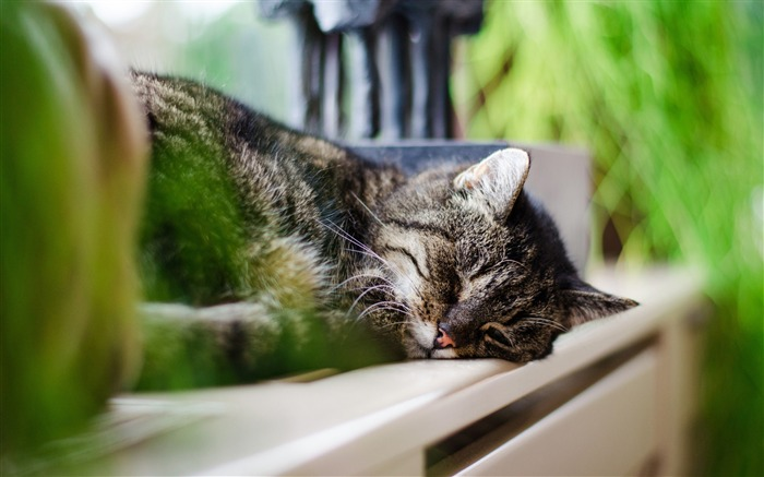 Sleeping cat-Photo HD Wallpaper Views:2171