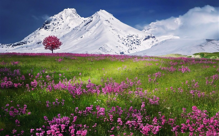 Amazing Nature Scenery-HD Wide Wallpaper Views:1276
