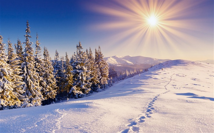 Footprints in the snow-2015 Landscape Wallpaper Views:2063