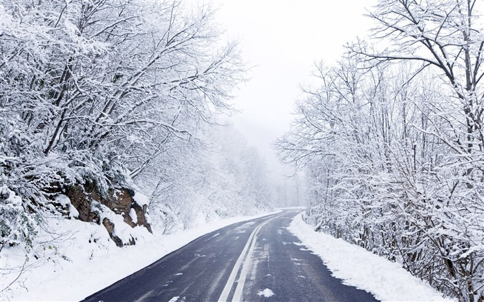 Forest cold winter road-2015 Landscape Wallpaper Views:1584