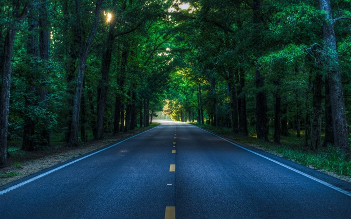 Green Forest Road-Nature Photo HD Wallpaper Views:2701