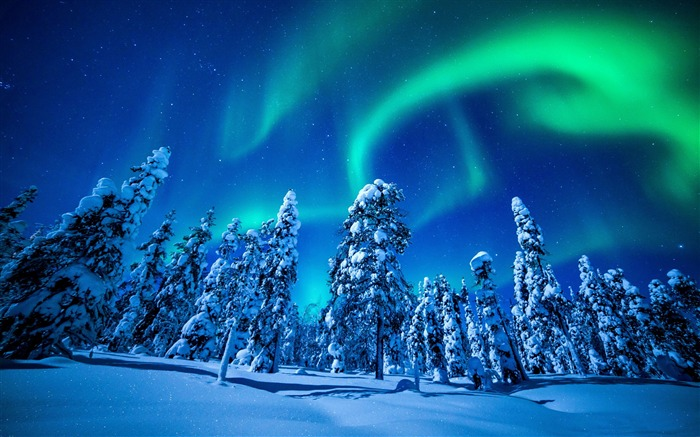 Northern lights forest winter-2015 Landscape Wallpaper Views:2017