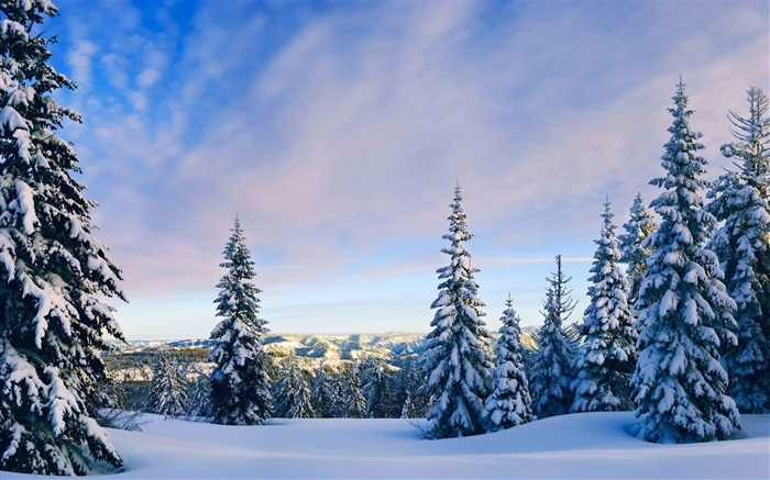Snowy pine trees-Nature HD Wallpaper Views:1876