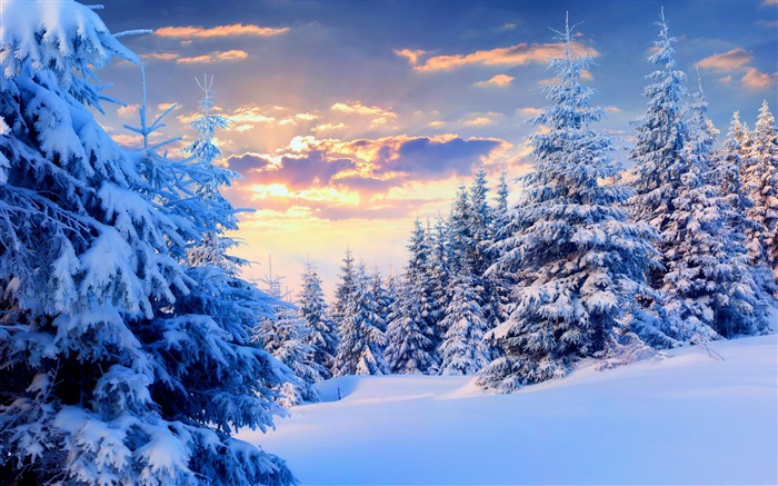 Trees under snow forest-2015 Landscape Wallpaper Views:2034