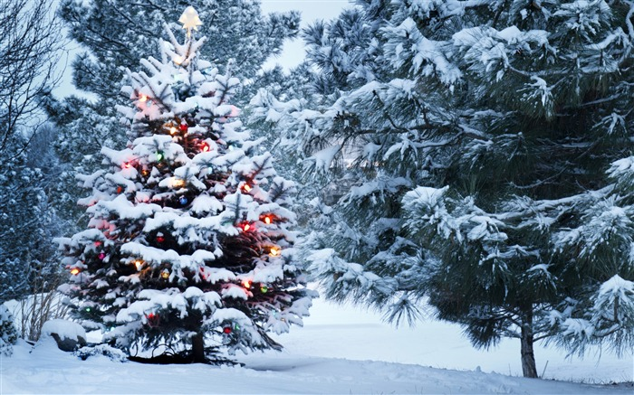 Beautiful christmas tree-2016 Merry Christmas Wallpaper Views:2226