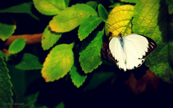 Butterfly flying green leaves-High Quality HD Wallpaper Views:1587