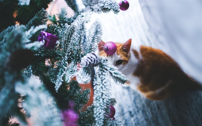Cat christmas tree-2016 Merry Christmas Wallpaper Views:2492