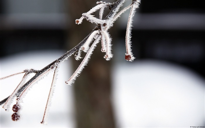 Frost branches-Windows 10 HD Wallpaper Views:1598