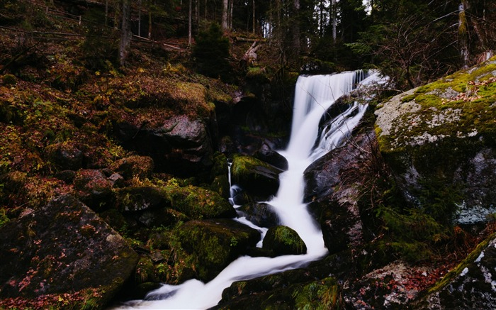 Little forest waterfall-Nature theme wallpaper Views:1407