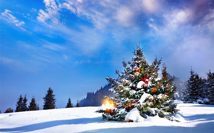 Outside christmas trees-2016 Merry Christmas Wallpaper Views:2499