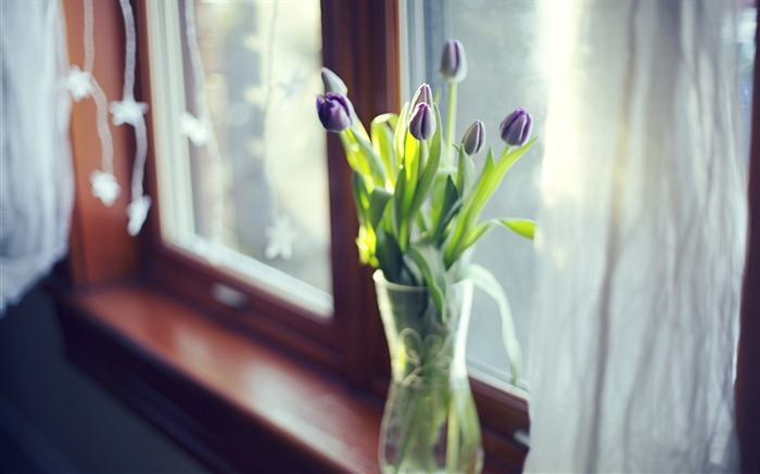 Tulips flowers vase window-photography HD wallpaper Views:1472