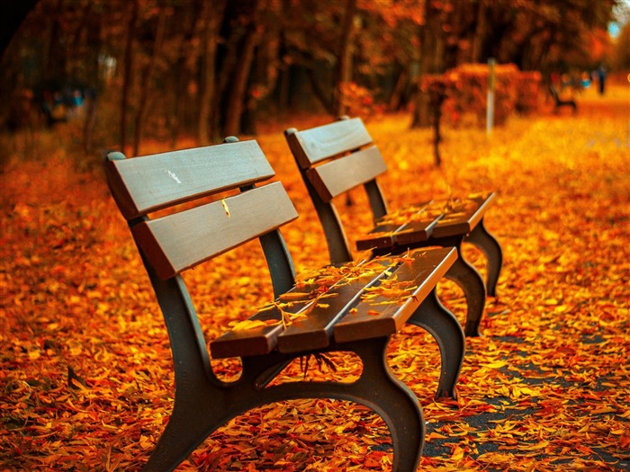 Autumn Leaves Bench-Photo HDR Wallpaper Views:2000